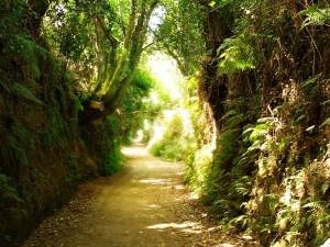 A pilgrim road